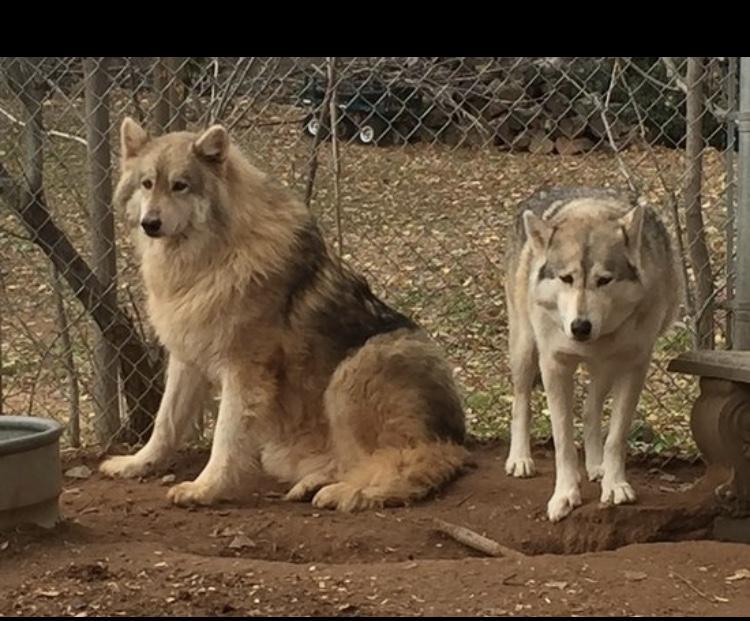Kira and Dakota